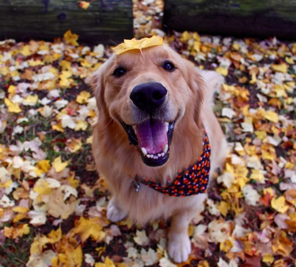 Dressed and ready for fall!