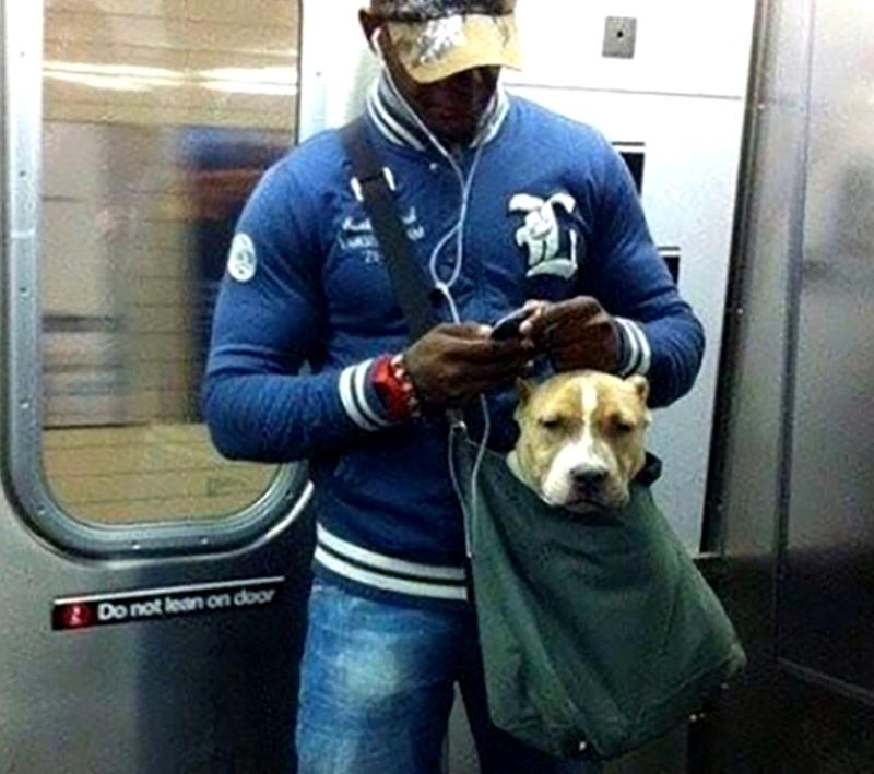 A man carries his dog in his sachel on the subway