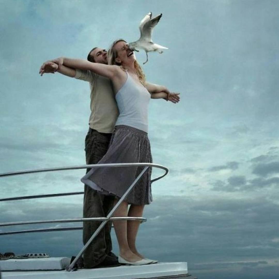 titanic seagull recreation