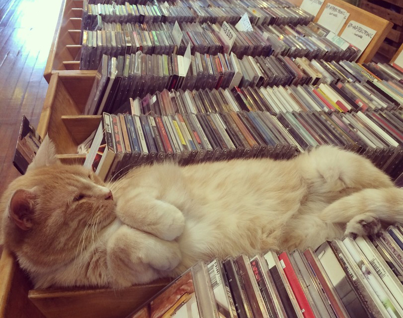 Cat naps in a record store's CD shelf