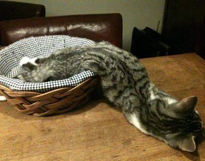 Cat sleeps halfway in a basket