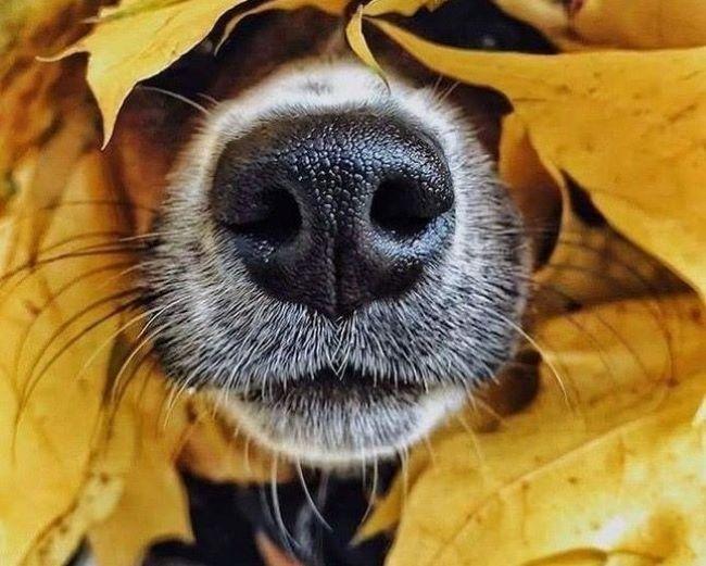 I smell you!