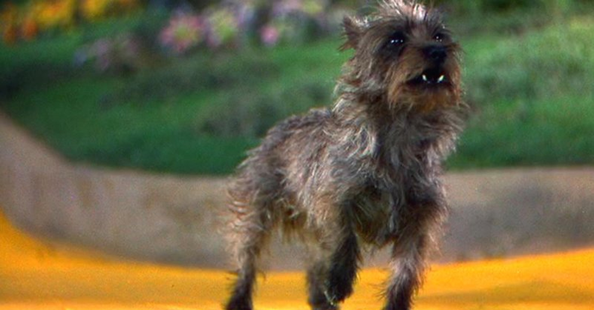 terry the dog in the wizard of oz