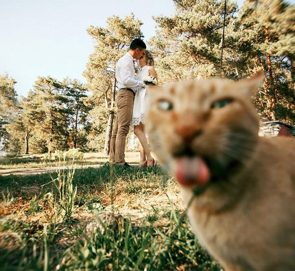 wedding cat photobomb
