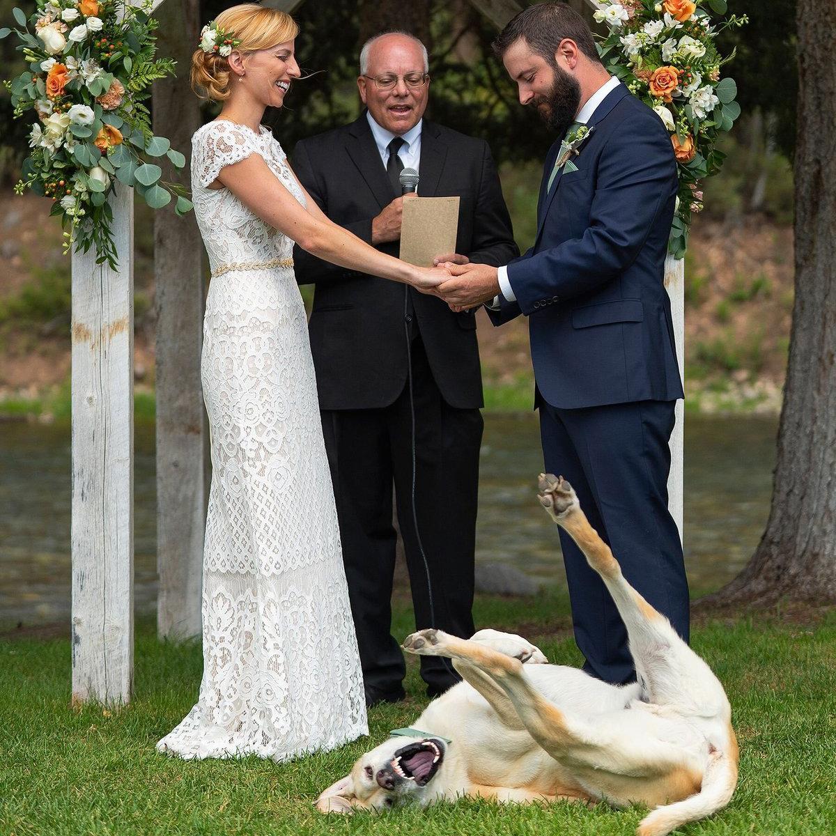 wedding_dog_People-16724