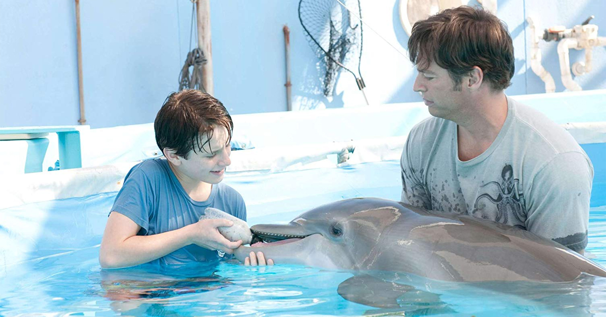 winter the dolphin being fed by harry connick jr. and nathan gamble