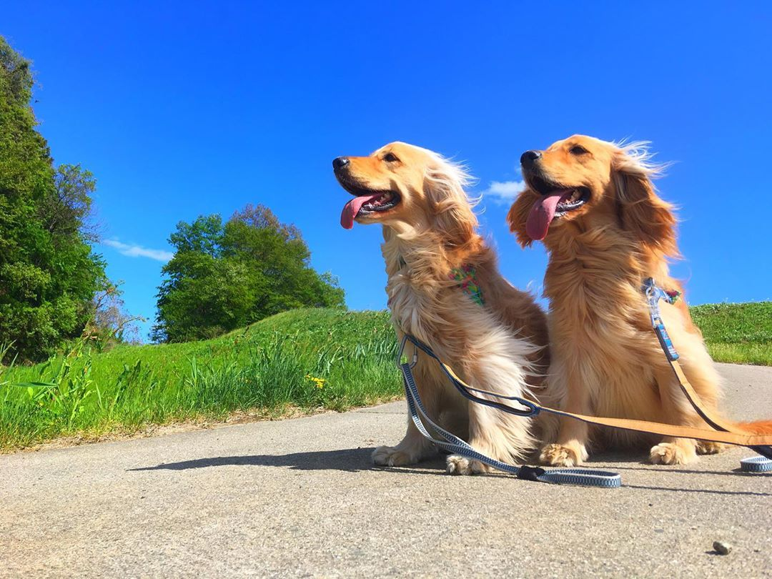blue sky with dogs