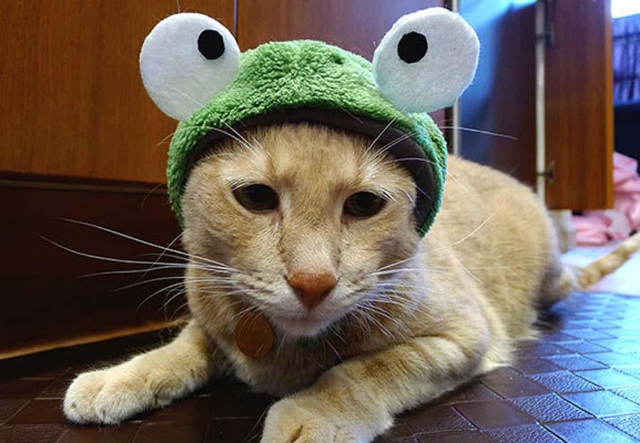 Another-Frog-Cat-Halloween-Costume-36383