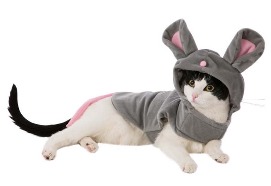 Another-Mouse-Cat-Halloween-Costume-73048