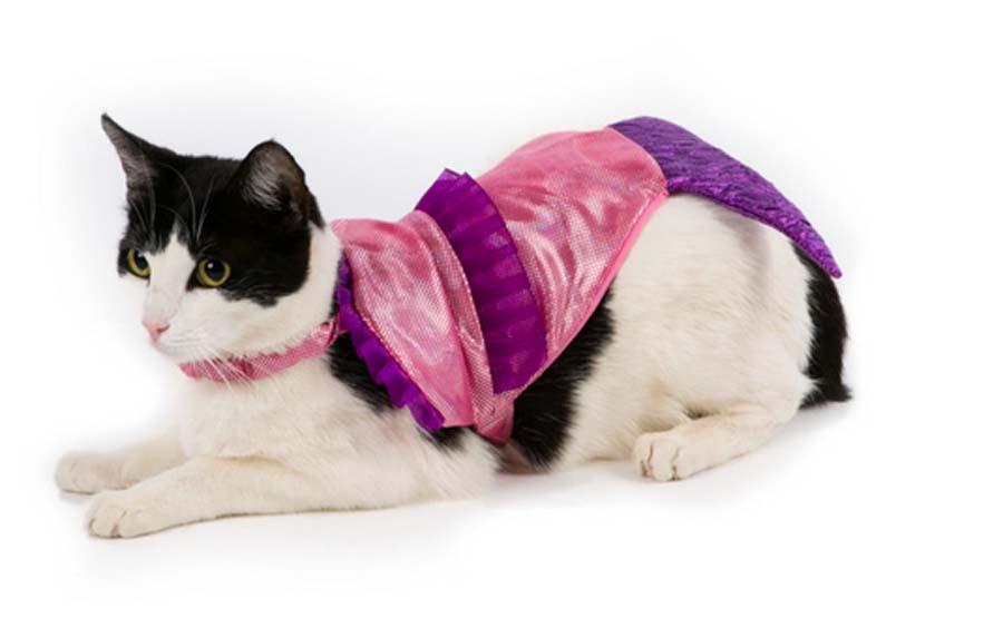 Cat-Mermaid-Halloween-Costume-86209