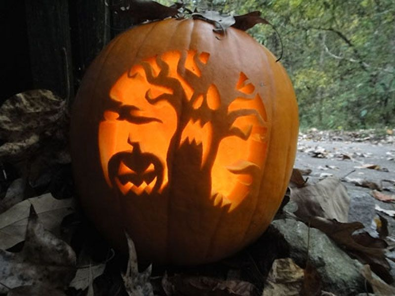 An evil pumpkin and a scared tree are carved into a pumpkin.