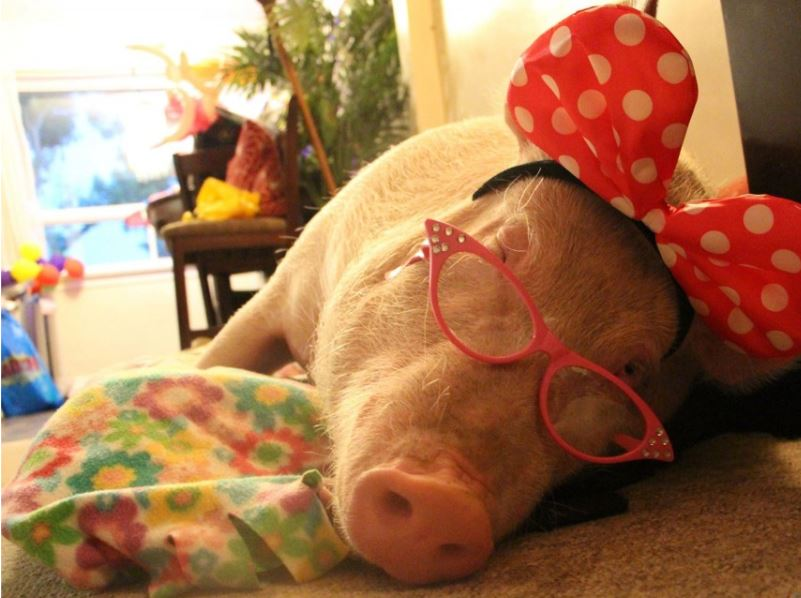 Esther naps in Minnie mouse ears and pink glasses.