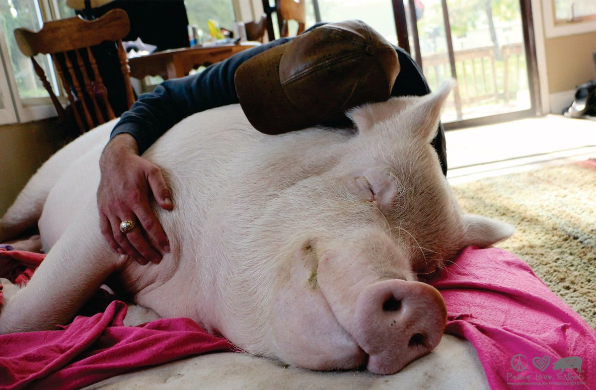 Owner hugs Esther as she naps on the living room floor.