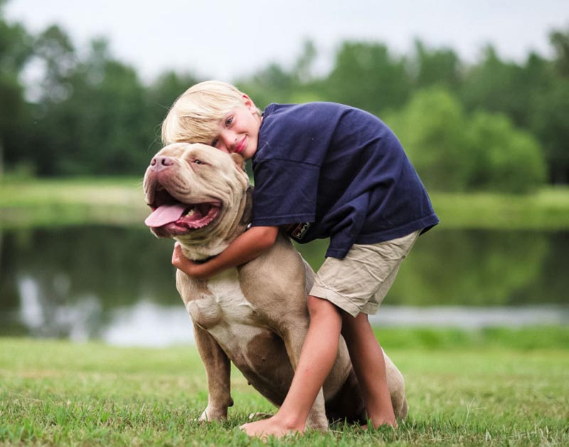 A young boy leans down to hug his pitbull.