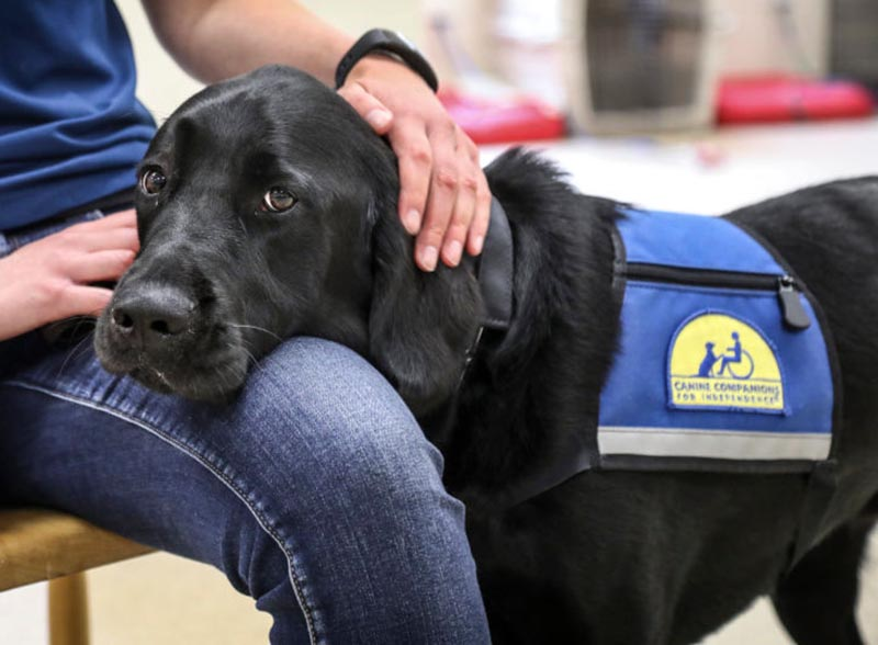 A black Labrador retriever rests its head on the leg of a seated person.