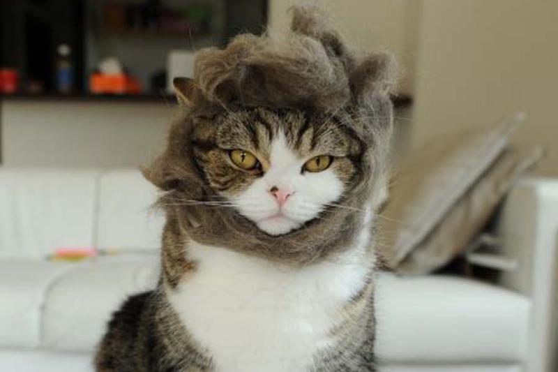 Hair-and-Beard-Cat-Halloween-Costume-20783