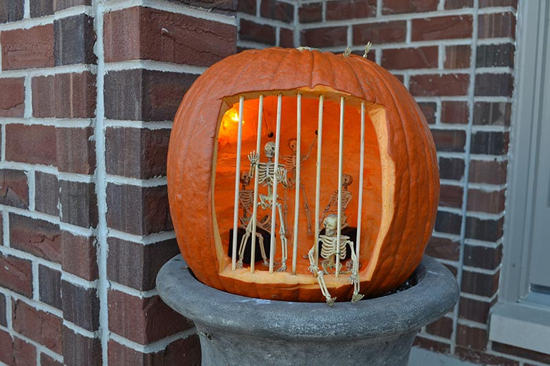 Fake skeletons are placed behind bars in a carved out pumpkin.