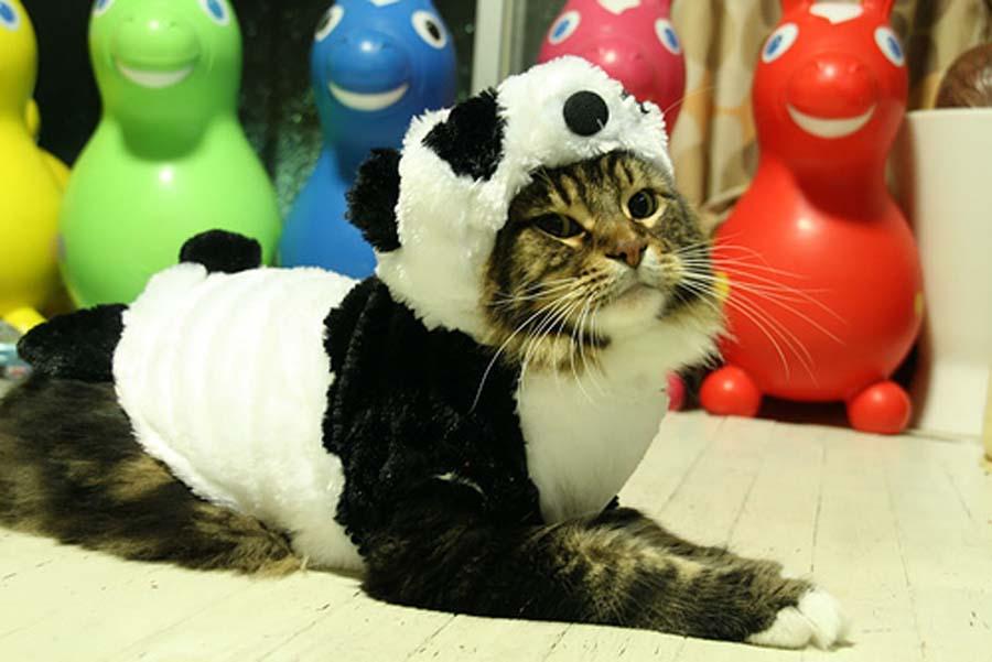 Panda-Cat-Halloween-Costume-15926