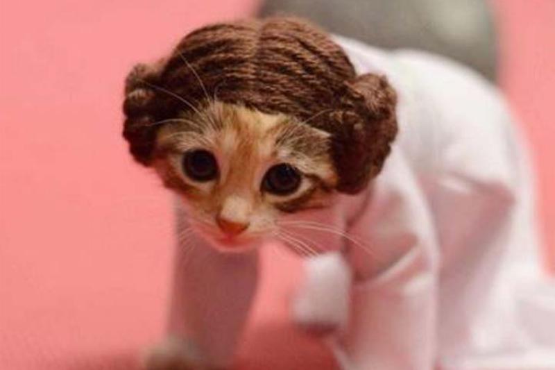 Princess-Leia-Halloween-Costume-for-Cat-57245