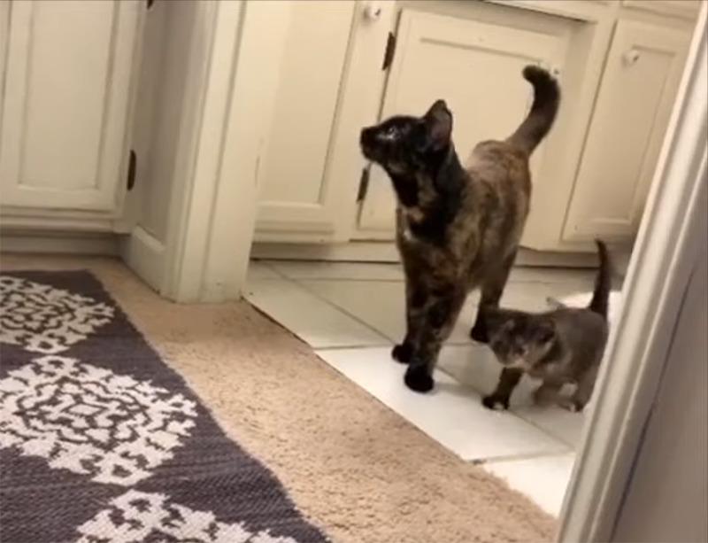 Francis walks alongside Rosie through the kitchen