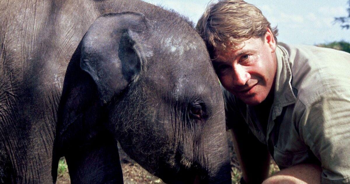Steve Irwin poses with an elephant at Australia Zoo September 16, 2006 in Beerwah, Australia.