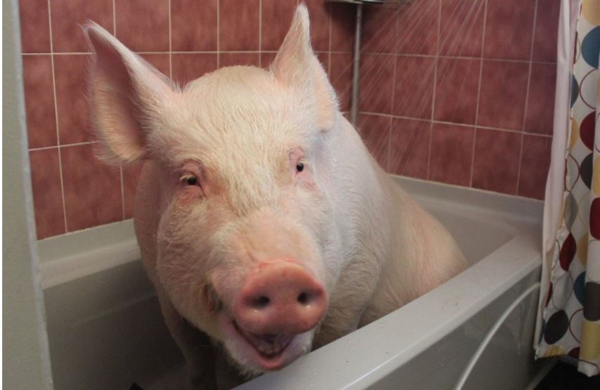 Esther sits in a shower.