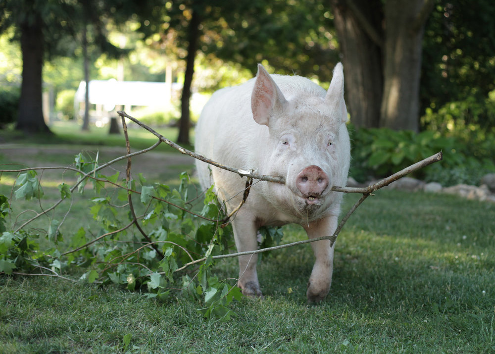 Esther carries a branch across a lawn.