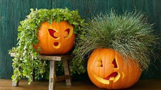 A female face and a male face are carved into pumpkins that are then filled with leafy plants.