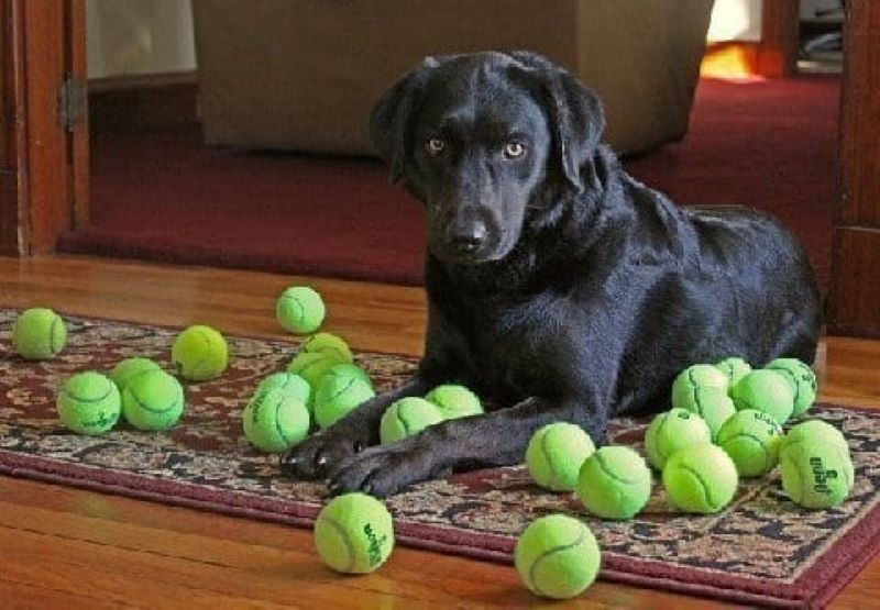 For The Love Of Tennis Balls