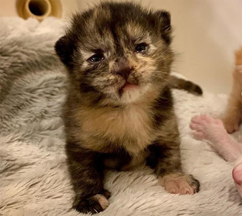 Francis as a newborn kitten