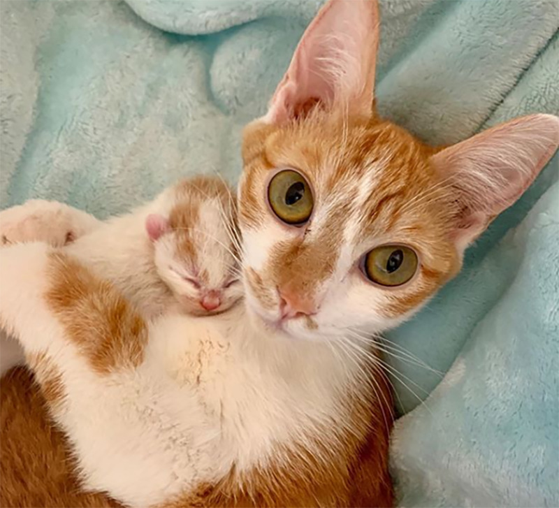 A cat hold her newborn kitten with both arms