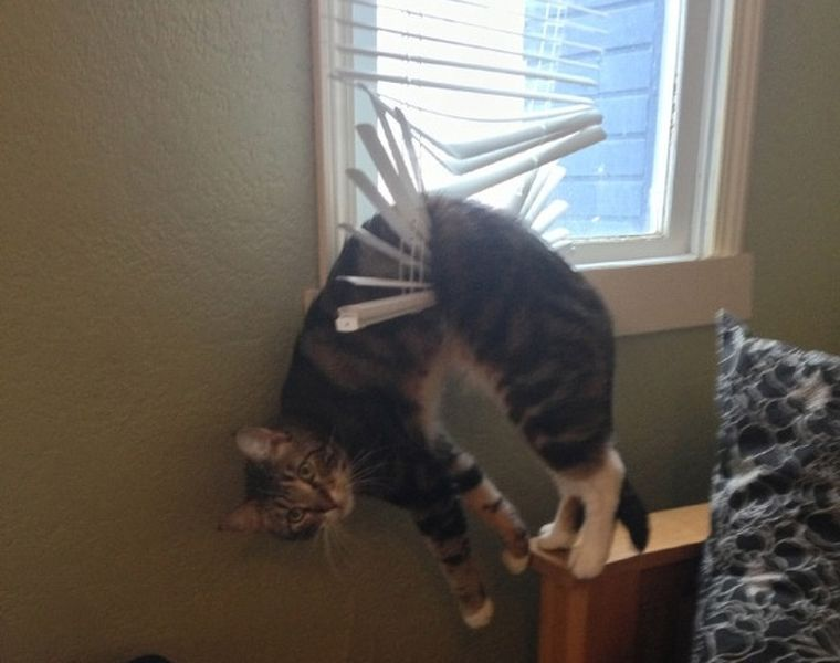 a cat stuck in the blinds