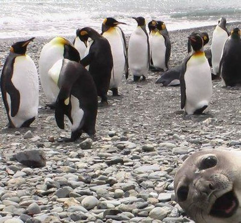 This Photobomb Has Our Seal Of Approval