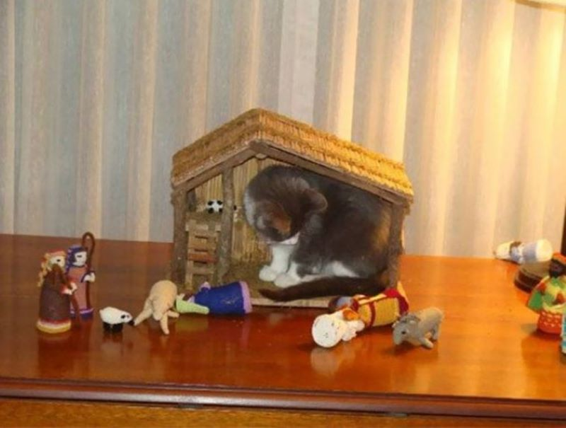 When The Figurines Didn't Get The Memo That The Manger Is Yours