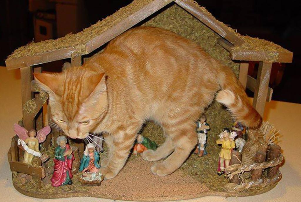 Cat in a small nativity scene
