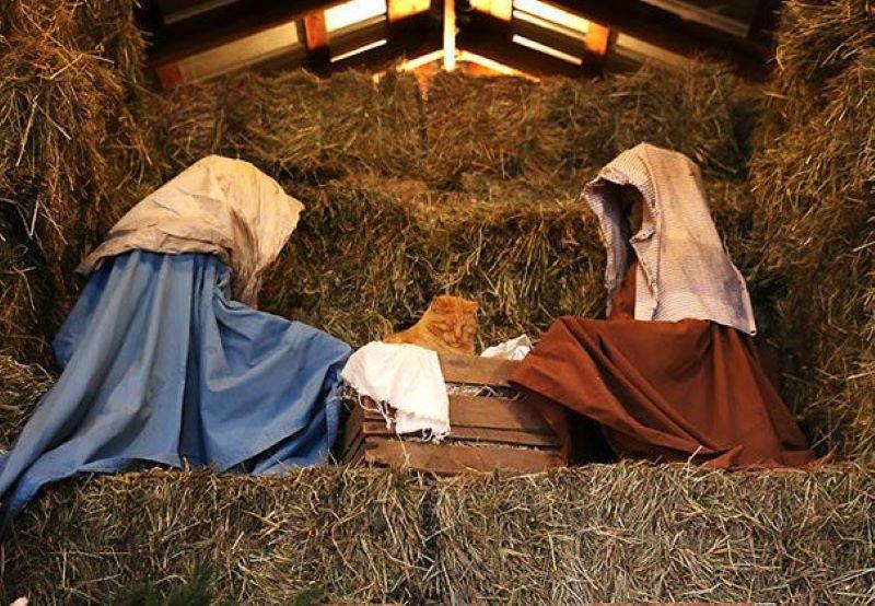 Cat + Crate = Disrupted Nativity Scene