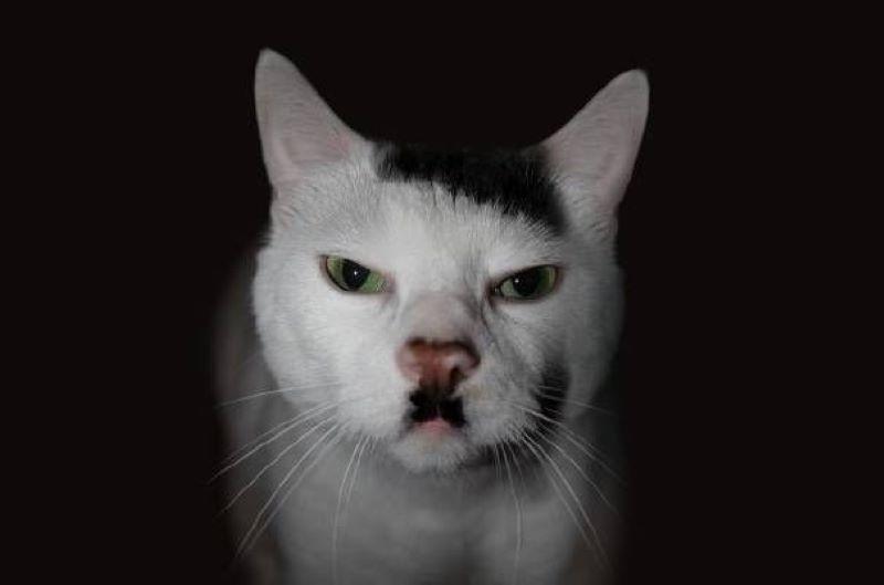 Kitler The Cat