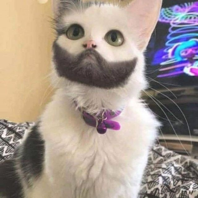Someone Needs To Teach This Cat How-To Shave