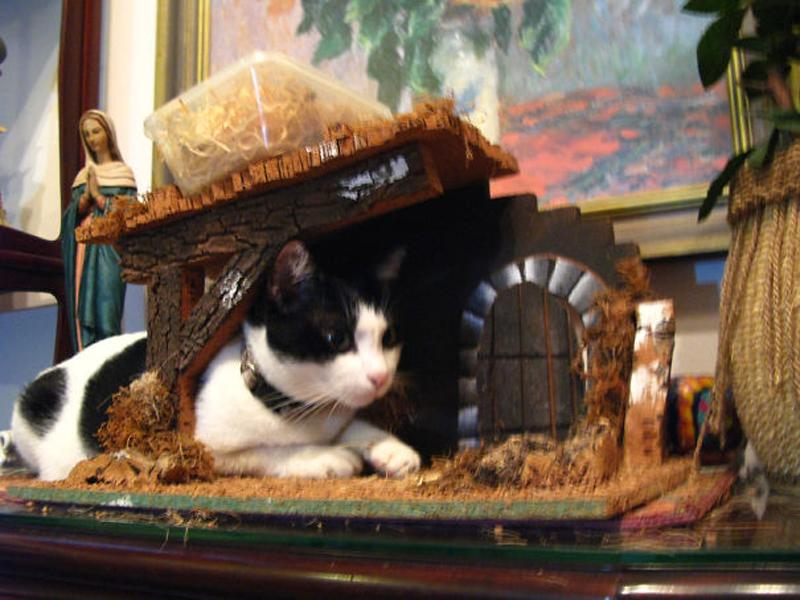 Cat underneath manger