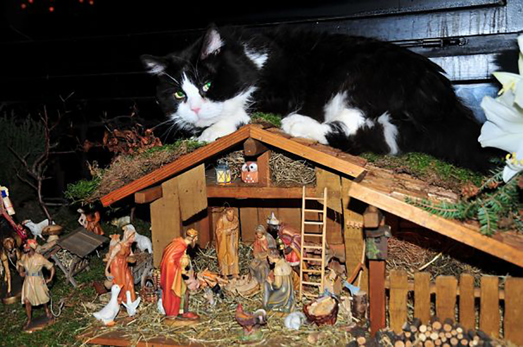 Cat sitting on roof of manger