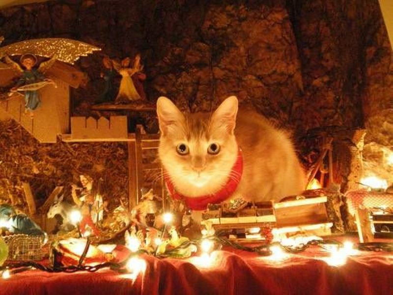 This Cat Is Summoning Demons From The Scene