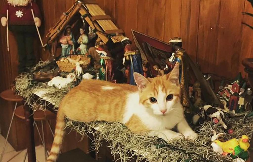 Cat laying on nativity scene