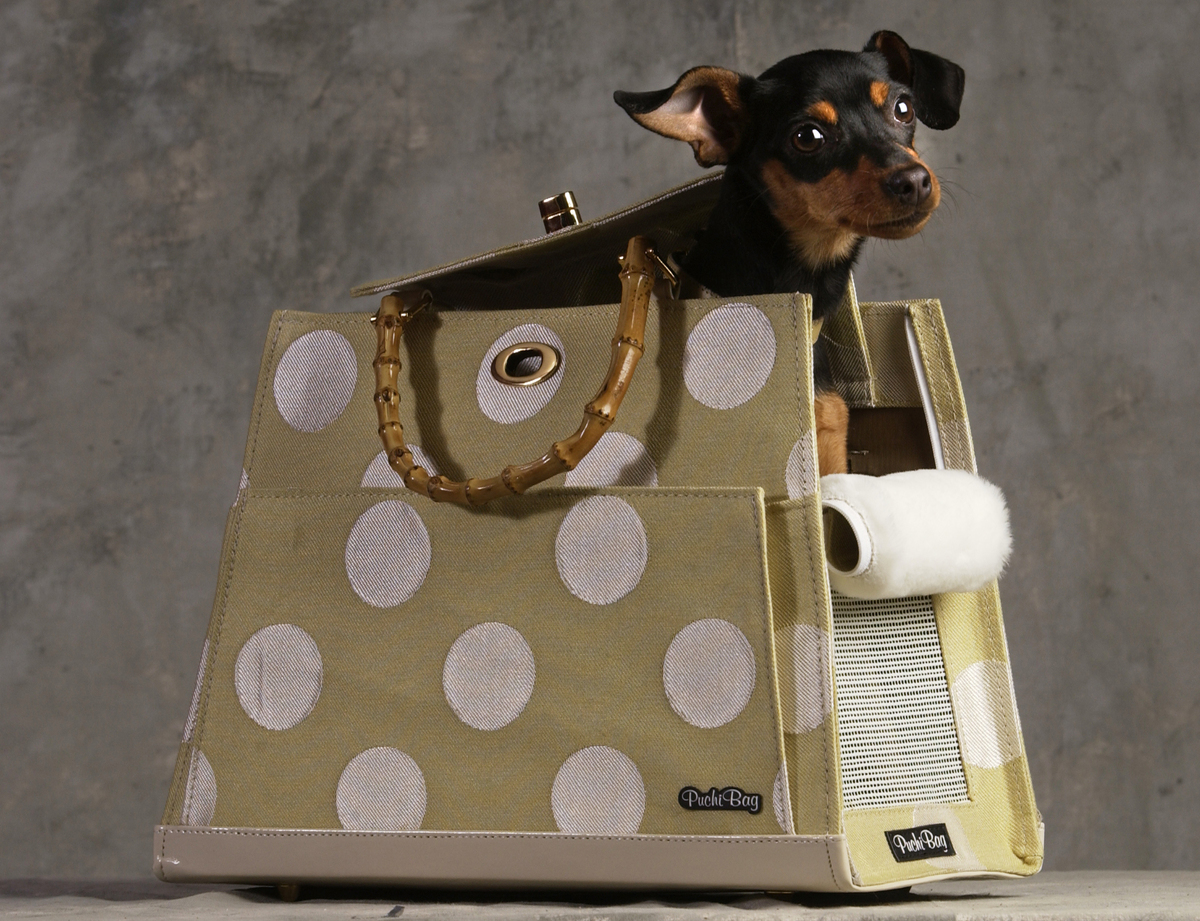 A miniature pinscher sits in a purse.