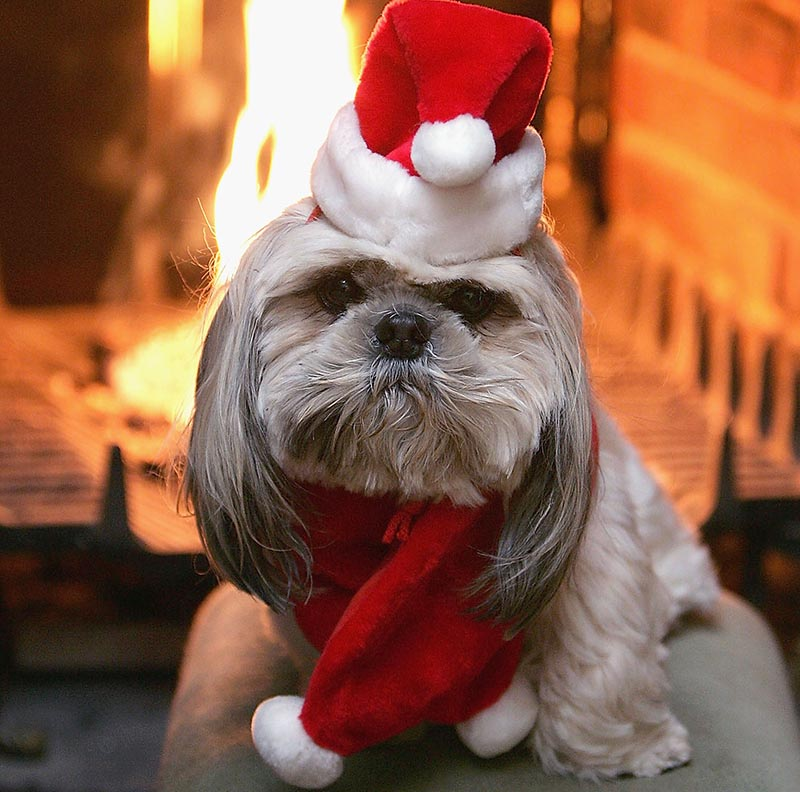 A dog sits in front of a lit fireplace wearing a Santa hat and matching scarf.