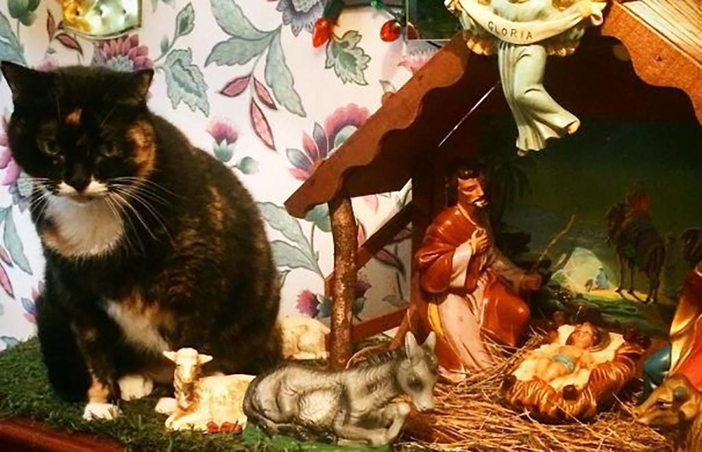 Cat next to nativity scene