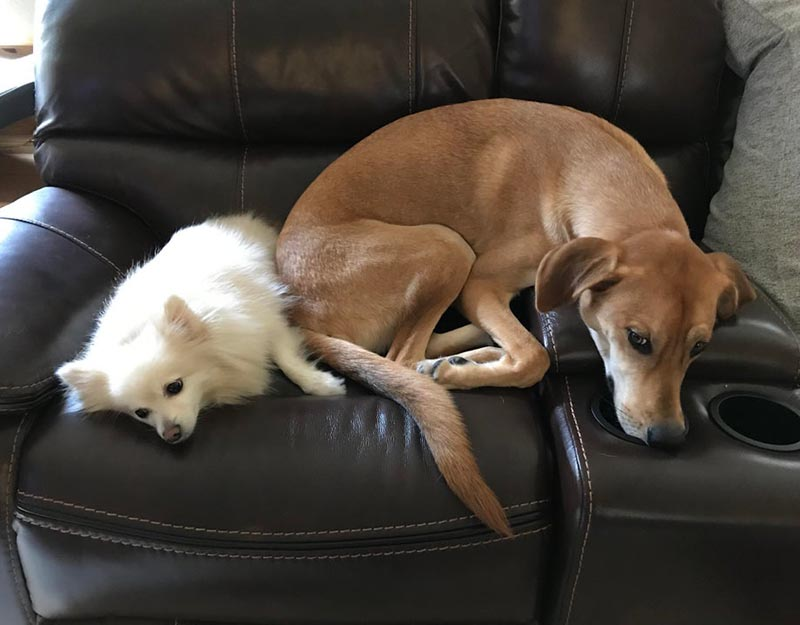 A small and large dog attempt to share a seat.