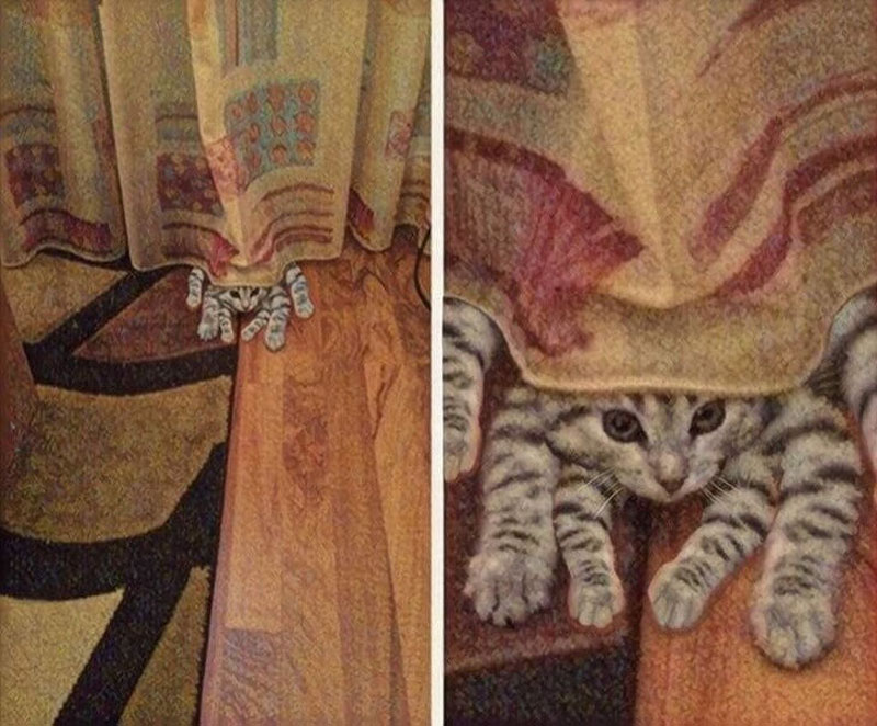 Spider cat peeks out