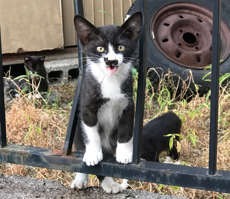 A kitten has a black patch on its nose in the shape of a cat.