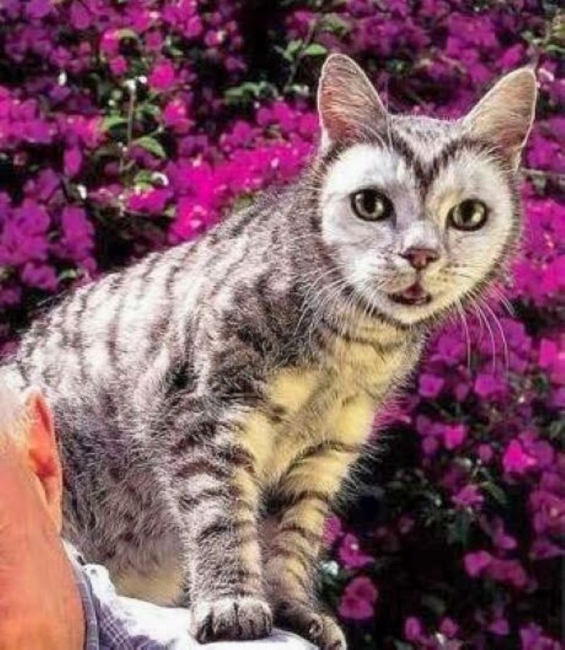 This Cat Wears Its Heart On Its Face