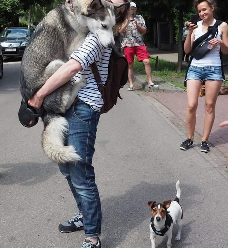 big-dog-being-held